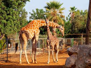 Zoological Gardens Limassol Tour Packages